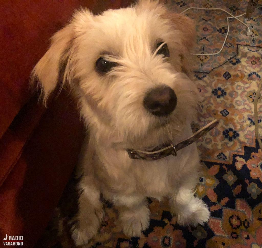 Erdis' cute dog interrupted the interview